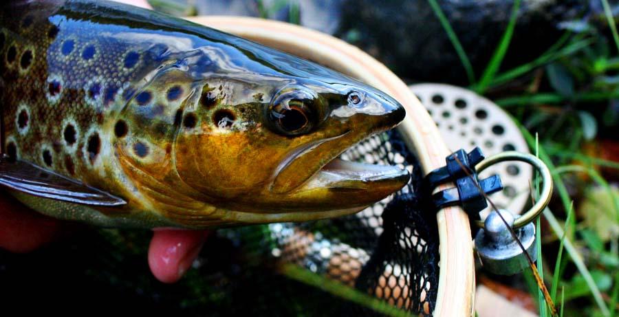 Platsguidning, hitta rätt plats för Fiske i Österdalälven | Älvdalen Fiske