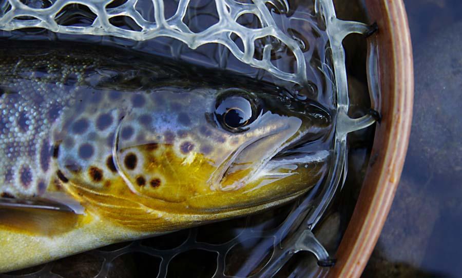 Guidad Fisketur i Dalarna, Österdalälven | Älvdalen Fiske